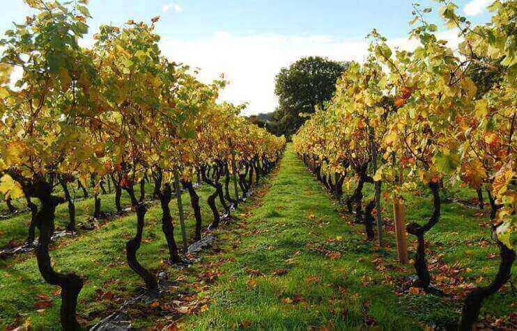 80英亩葡萄园- 距离墨尔本市中心1小时40分钟出售