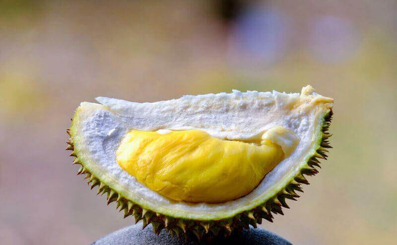 Own Your Very Own Durian Tree (Yearly Returns Up To 30%)