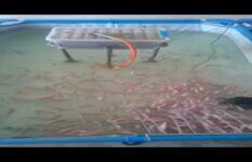 尼罗红鱼业转让